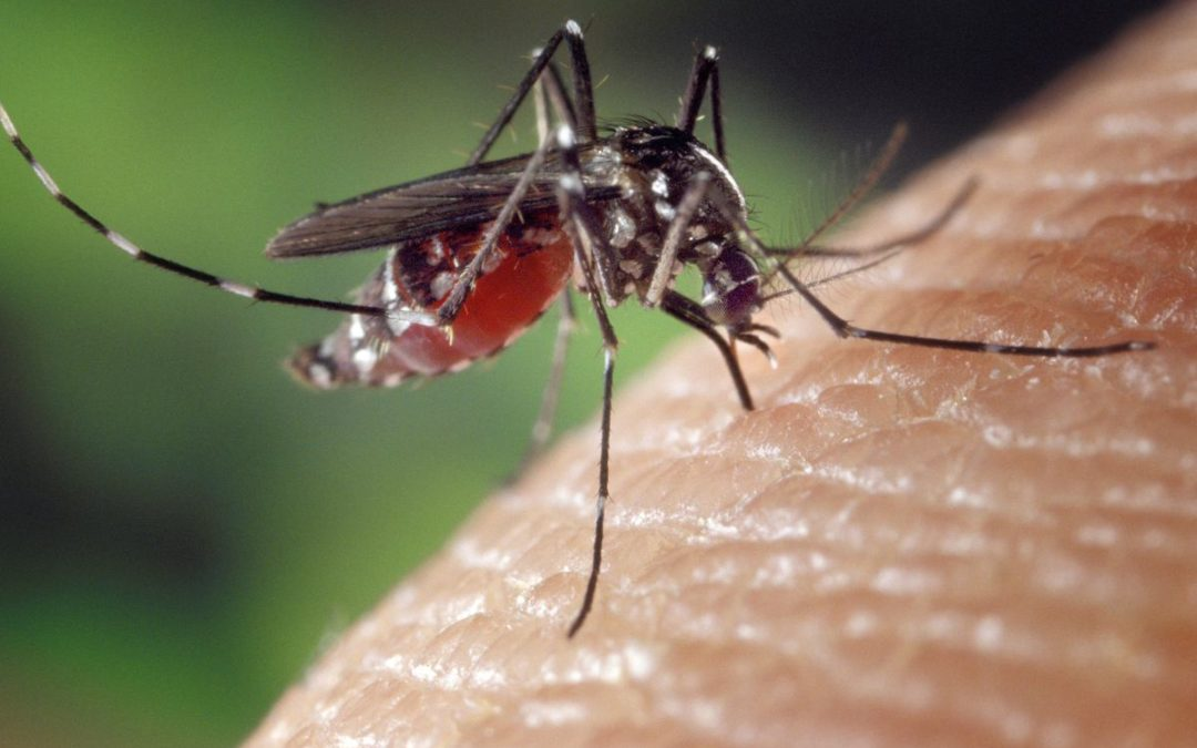 Why Mosquitoes Love Runners So Damn Much